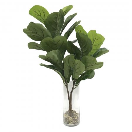 Urbana Fiddle Leaf Fig